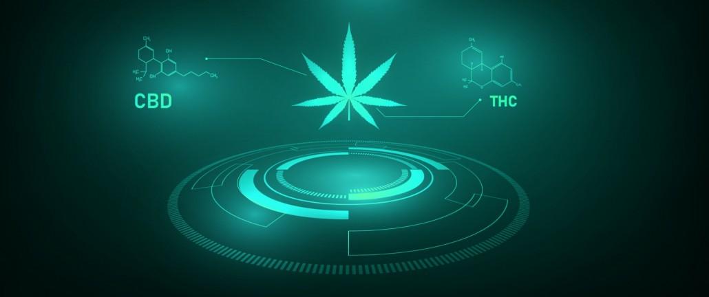 cannabis_210224_5